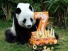 День Рождения у Панды!