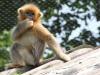 Милая обезьянка на дереве ждет вас в Оушен Парке!