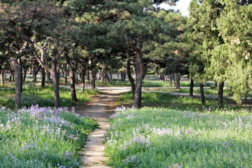 Парк в Храме Неба